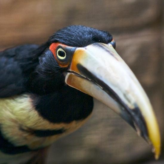 Toucan by mattphotos