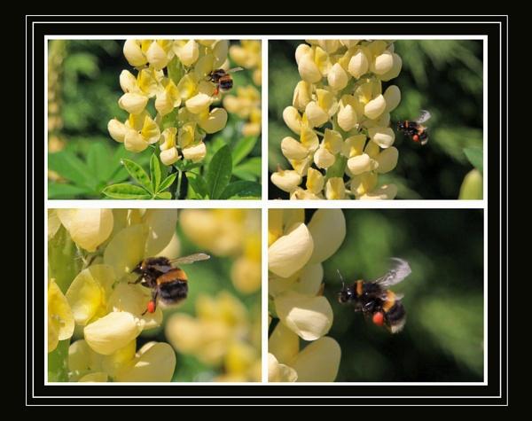 Bee Study by Mynett