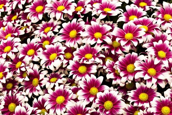 A Few Flowers by Rorymac