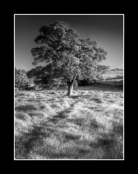 Sunlight on a tree by derekhansen