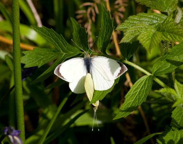 butterfly by two by HuntedDragon