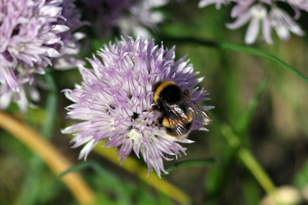 Bee 2 by TIMOINDUBLIN