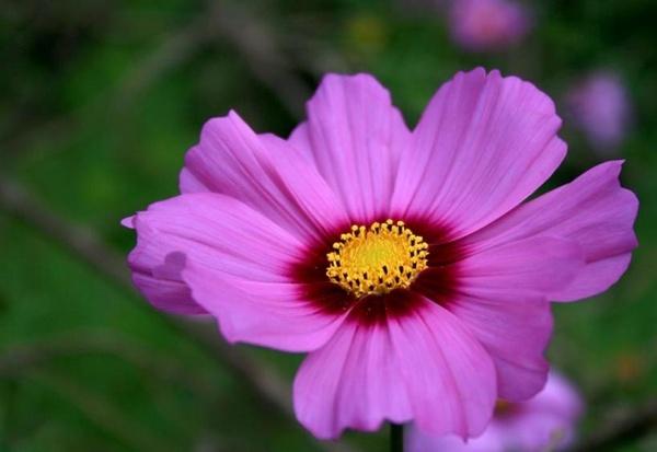 Purple flower by PeaceLily