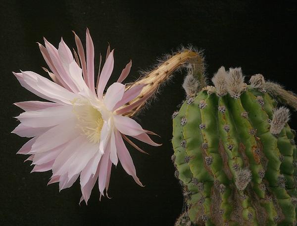 cactus by alan h.