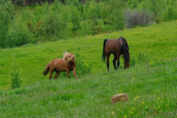 Crazy Horses by jaktis