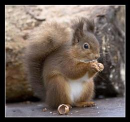 Nut Crunching
