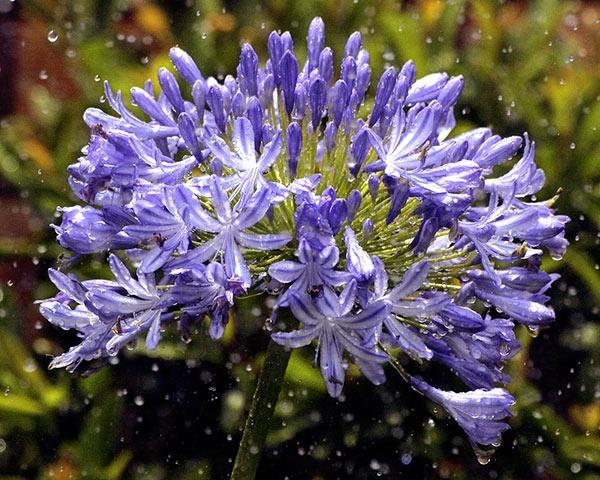 Flowers in the rain. by ShedMan