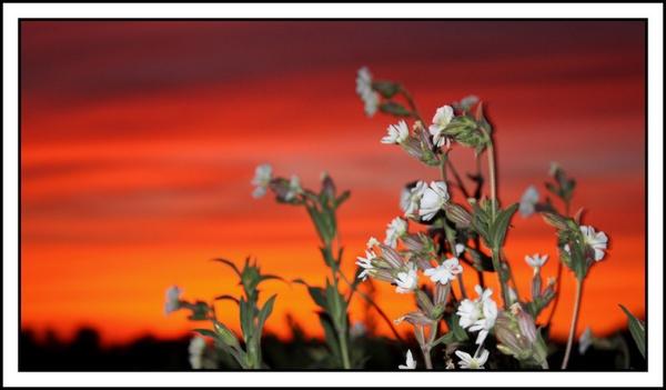 Prairie sunset by LongDucDong