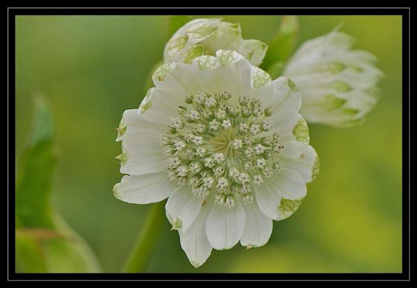 Pretty Flower by GaryR