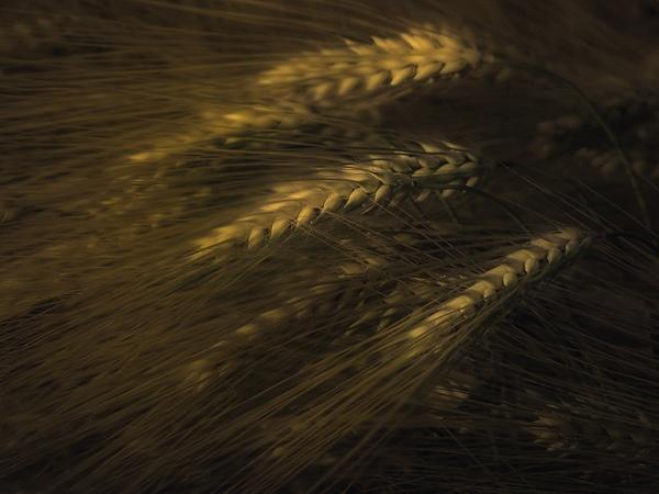grain by joze