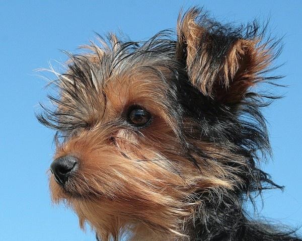 My other dog - Kiah by ENGLISHSKIN