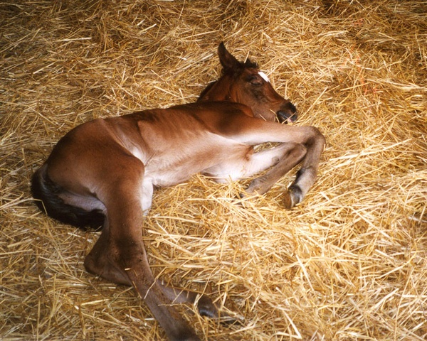 Sleeping Baby by wsteffey
