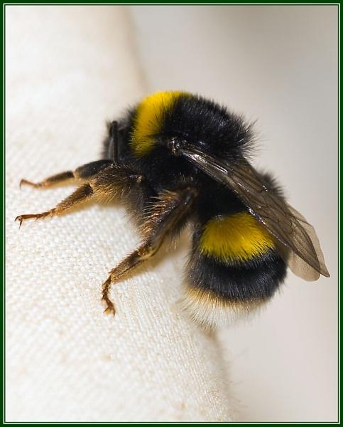 Bee by Stuart463