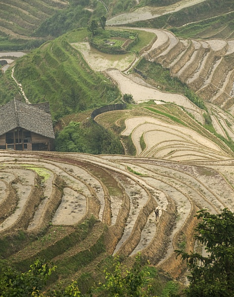 Rice Terraces by jacekb