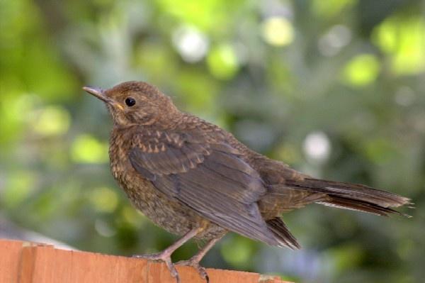 Black-Bird by Paul-Collins