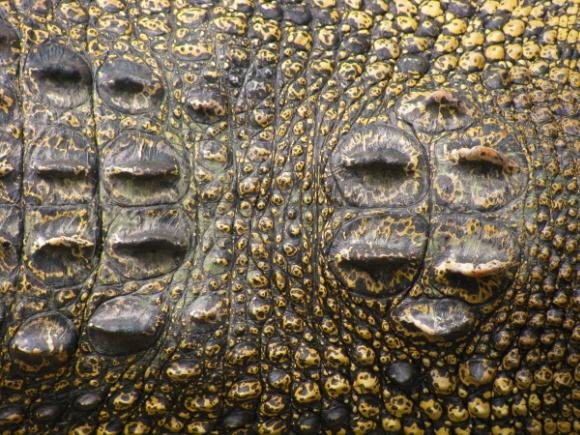 Crocodile by LindaSJ
