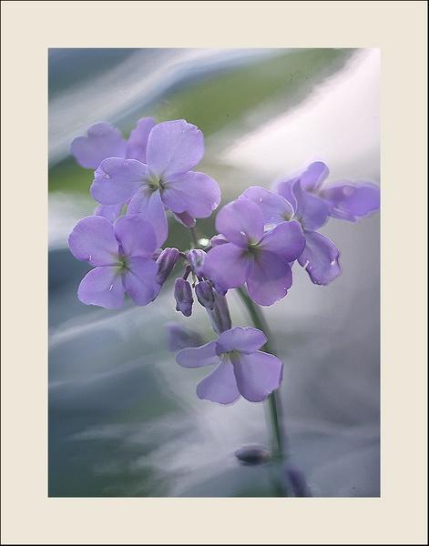 blue by maratsuikka