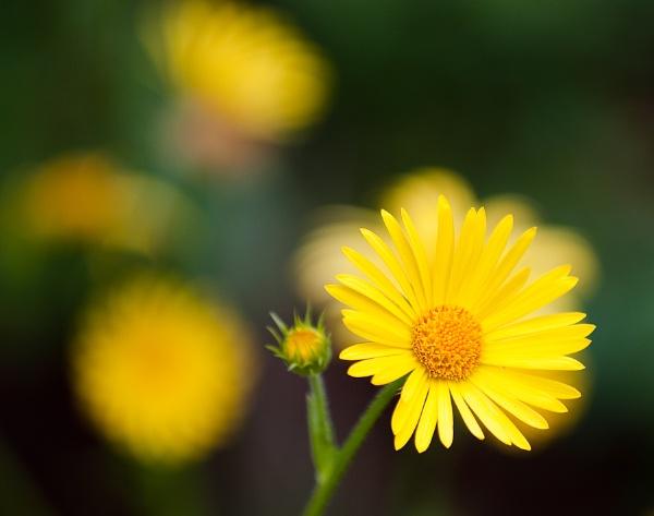 Sunshine by Rorymac