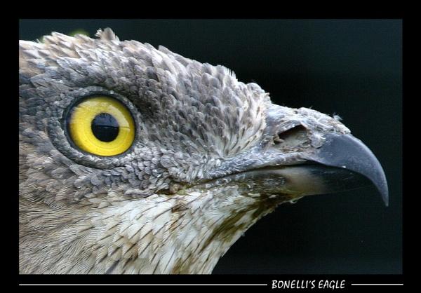 The Eye\'s Have it by SteveMoulding