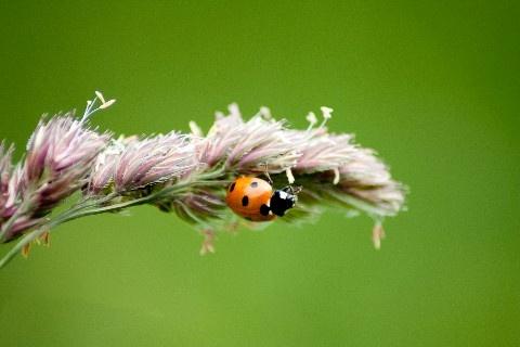 ladybird by mikaela4