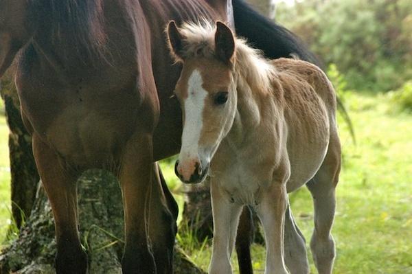 foal by alextidby