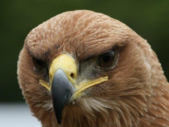 Big Bird by block119er