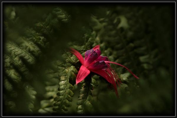 Fuchsia & Fern by Morpyre