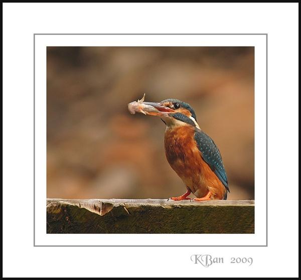 Bin Fishin ! by KBan