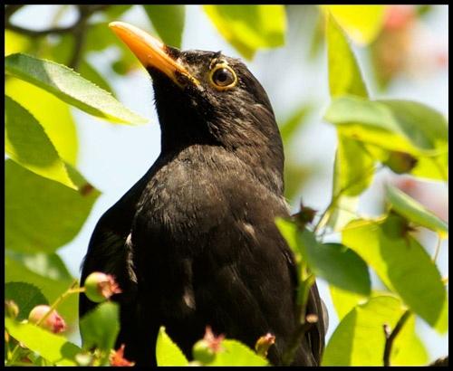 *Black Bird* by Dorothea