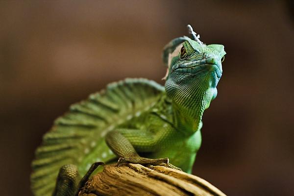 Lizard by mjstead