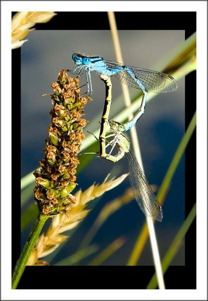 Damsel fly by Martin_R
