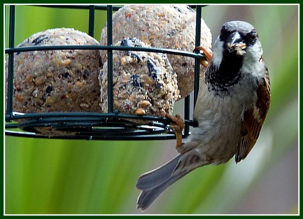 First Bird Photograph by Stuart463