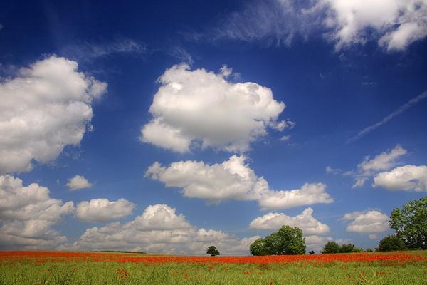 Poppy meadow by danielwaters