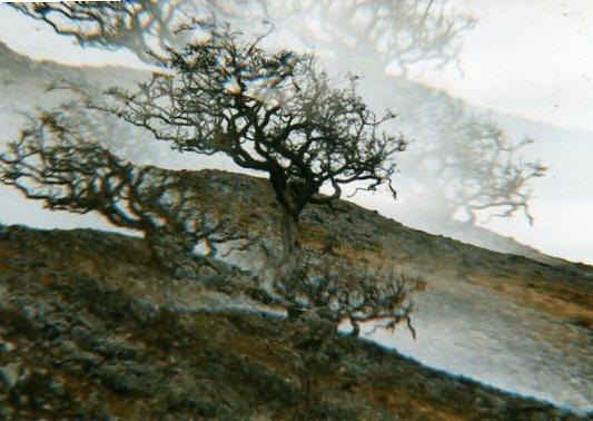hawthorn tree in black mountains by bernie32