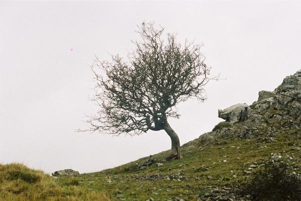 bondai hill by bernie32