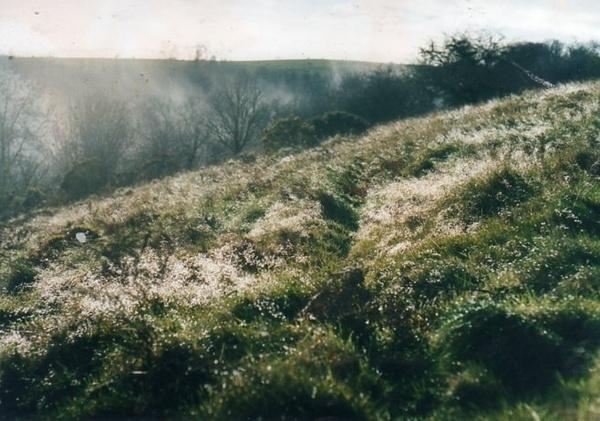 dew in grass ,hill in talley by bernie32