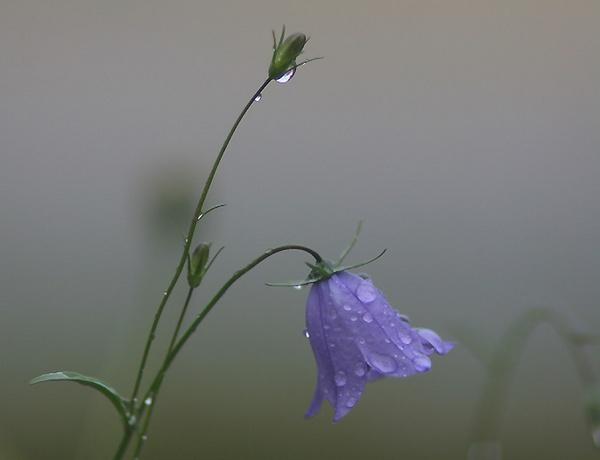 rain rain rain by maratsuikka