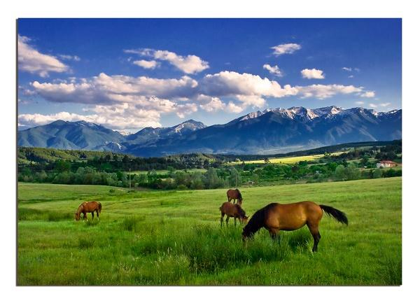 Horses by Dimitre_P