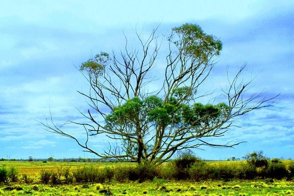 One Tree by ablast