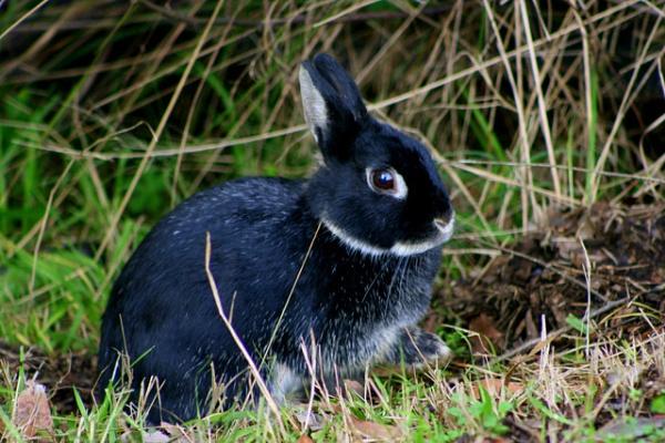Wild Bunny by x_posure