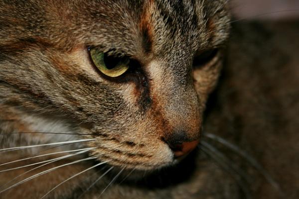 My Cat Mumma Cat by x_posure
