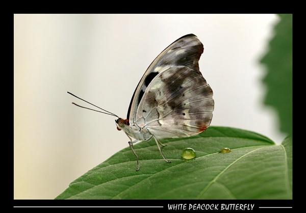 Flutterby by SteveMoulding