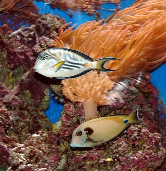 marine fish by darrennmel