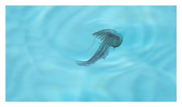 Medusa by ian.daisley
