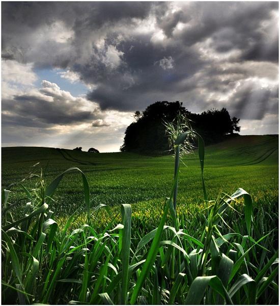 Green Sunday by bobalot