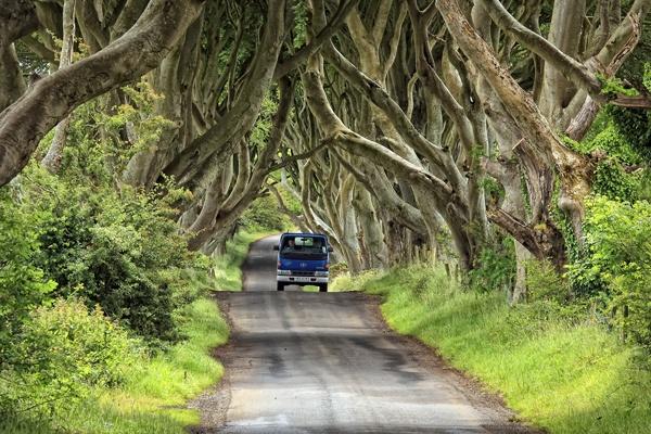 Dark hedges and blue van by LawrenceP