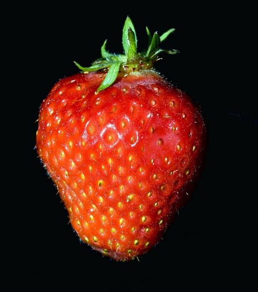 strawberry by v8dunc