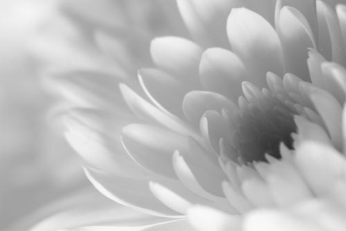 flower by pieaddict