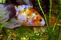 My Fish 1