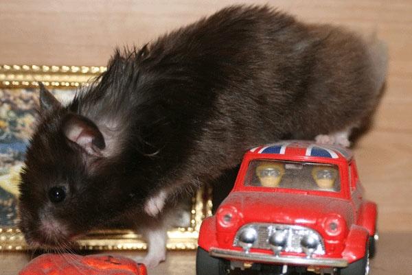 Mini Maisy by 890andy